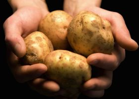 Strong supply drives down potato prices