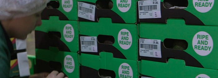 Asda investment adds up for avocados