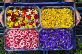 Sainsbury's launches edible flowers range