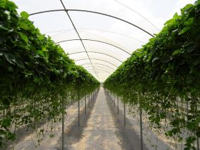 Planasa opens pioneering hanging tip nursery
