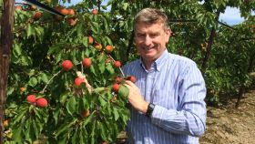 Record UK apricot crop hits shelves