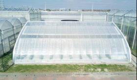 Cucumbers shine in Chinese solar greenhouse