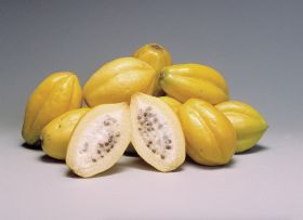 Maryland issues papaya warning