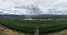 NW cherry crop continues to climb