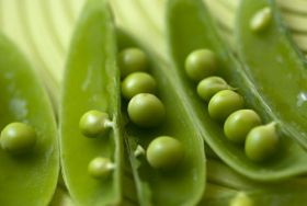 Pop-up planned for Pea Week