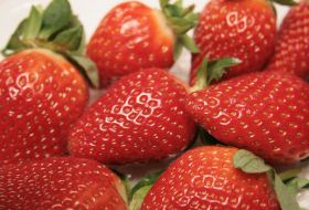 Egypt to tighten strawberry controls