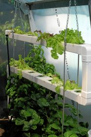 Market for hydroponic veg set to rise