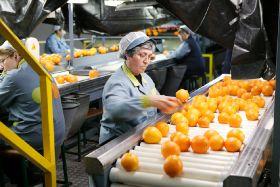 New European citrus giant formed