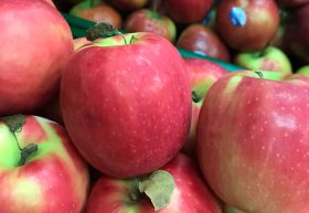 Europe's apple crop 'smaller than forecast'