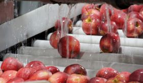 Decline in US apple forecast