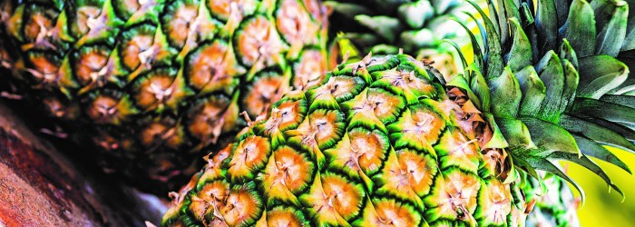 Costa Rica pins hopes on China's pineapple intake