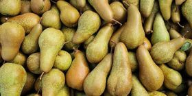 Italian pear prices show early promise