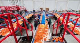 Chilean citrus exports hit new record
