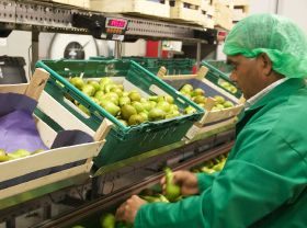 Carrefour offers residue-free pears