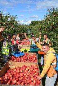 UK growers fear labour shortage