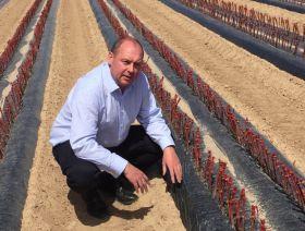UC Davis brings resistant rootstocks to Europe