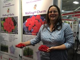 Raspberry breeding consortium launches first two varieties