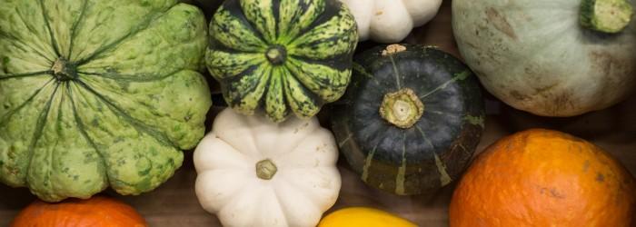 Chefs favour mini pumpkins