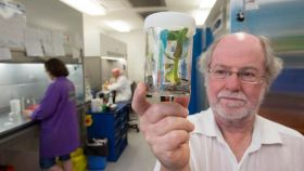 Breakthrough in fight against Panama Disease
