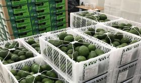 Pacific Fruits breaks new ground in Middle East