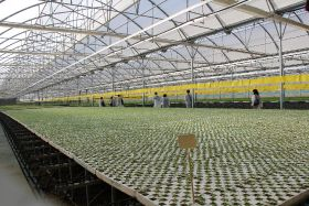 ECPA press trip Almeria_Oct 15, 2015_Tecnobioplant Nursery_greenhouse
