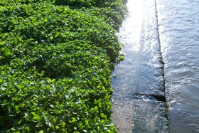 Watercress industry launches first-ever hygiene guide