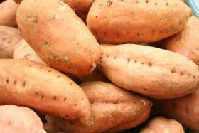 Colruyt to sell Belgian sweet potatoes