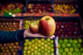 Morrisons sells supersize Braeburn