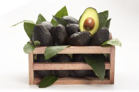 Mexico set for bumper avo exports