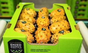 First sea shipment for 2018 kiwano season