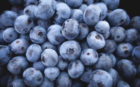 Spain's blueberry and raspberry exports up