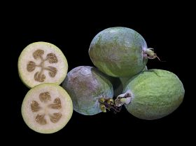 Feijoa hope for Gazan farmers