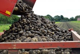 Farming incomes down 17 per cent