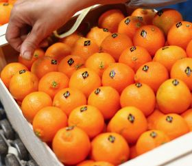 High temperatures hit Moroccan citrus