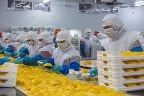 Wealmoor acquires Peruvian mango and frozen avo supplier