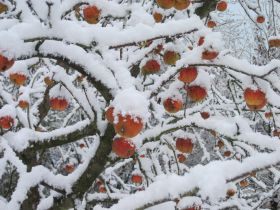 Fresh produce sector counts cost of the snow