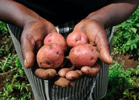 Kenyan farmers embrace contracts
