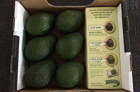 Avocado six pack appeals to Australian market