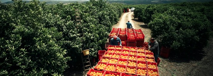 Italian citrus closes in on China access