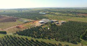 Jaguacy boosts avocado output