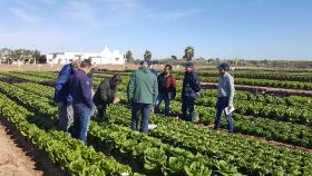 Bayer to launch new Nunhems lettuce varieties