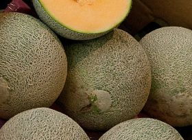 Listeria monocytogenes found on rockmelons