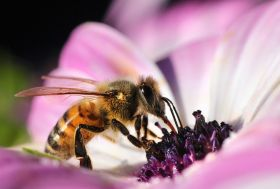 Glyphosate could be killing bees, researchers warn