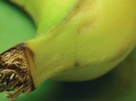 It's Fresh! hones in on banana sector