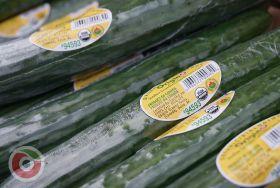 OriginO boosts salad production