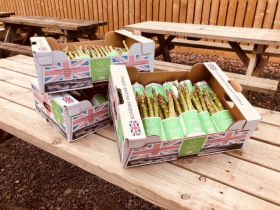 First Brit asparagus goes to charity