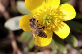 Bayer outlines bee neonics study
