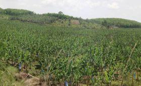 Cote d'Ivoire stresses eco approach