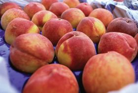 Mixed forecast for EU stonefruit