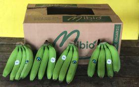 New organic bananas arrive in UK